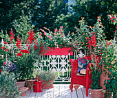Roter Balkon: Lobelia speziosa, Dahlia-HYBR., Mentha, Solanum rantonnettii, Lantana, Thunbergia, Kasten: Salvia, Zinnia, Cuphea