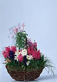 CLEMATIS ALPINA, Hyacinthus ORIENTALIS,