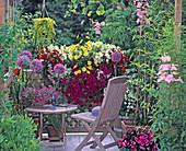 Kasten = Dianthus, NICOTIANA, ARGYRANTHEMUM, PETUNIA - SURFINIA, ALLIUM / Riesen