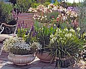 weißes ARRANGEMENT: ARGYRANTHEMUM, Salvia