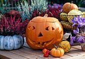 Geschnitzter Halloween - Kürbis (Cucurbita), Calluna
