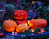 Halloween, carved and hollowed out pumpkins (Cucurbita)