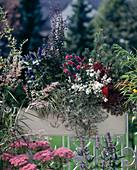 PINUS MUGO 'Pumilio',Carex hachijoensis, BERBERIS