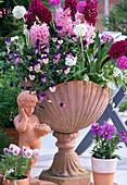 Schale: Hyacinthus 'Pink Surprise', 'Woodstock'