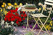 Frühjahrsbeet: Tulipa 'Red Emperor', 'Golden