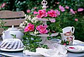 Kaffeetafel: Etagere mit Wildrose 'Park Wilhelmshöhe'