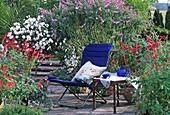 Salvia leucantha, Salvia COCCINEA,