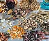 Samen v. lks. Oben: Ziermais, Allium, Papaver, Lathyrus, Kürbis, Tropaeolum
