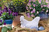 Viola cornuta 'Alpine f1 Sky', Viola cornuta 'Lubega Midnight'