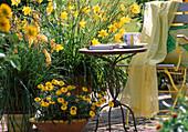 Kniphofia, Helichrysum, Hemerocallis citrina