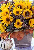Helianthus annuus (Sonnenblume), Herbstblätter