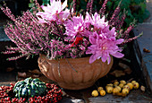 Calluna vulgaris 'Aphrodite', Colchicum-Hybr. 'Waterlily'