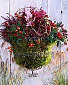 Rostfreier Drahtkorb (Wirework), Calluna vulgaris, Erica gracilis, Colchicum aut