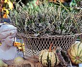 Calluna vulgaris 'Alice' (Knospenblühende Besenheide)