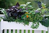 Gemüsekasten vorher, Artischocke:'Green Globe', Perilla 'Red', 1/2