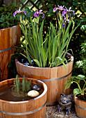 Iris kaempferi (Schwertlilie), Hippuris (Tannenwedel)
