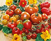 Tomatentableau: Cocktailtomate 'Picolino', 'Conqueror'