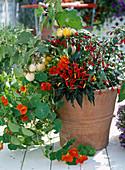 Tropaeolum majus (Kapuzinerkresse), Solanum melongena