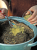Kasten bepflanzen