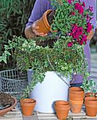 Hanging Basket bepfl.: 3/3: Den Korb mit weiteren Schichten