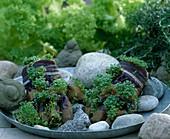 Alte Gartenkinderhandschuhe mit Erde füllen und Kresse