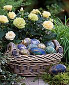 Rosa chinensis / Minirosen, Korb mit Ostereier in Blautönen,