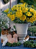 Amphore mit Tulipa 'Monte Carlo', Gypsophila / Schleierkraut