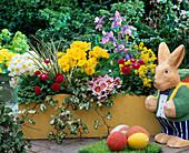 Gelben Holzkasten mit Primula elatior 'Crescendo Goldgelb' weiß