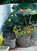 Balkon mit Kastanie und Sumpfpflanzen in Fässern mit