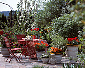 Frühlingsterrasse mit Tulipa-Hybr. 'Arma', 'Praestans Fusilier',