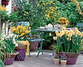 Gelbe Frühlingsterrasse mit Narzissen