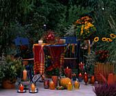 Spätsommerlicher Balkon: Actinidia / Kiwi, Calluna, Caryopteris / Bartblume, Rudbec