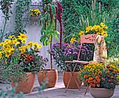 Rudbeckia hirta 'Autumn Colors', 'Prairie Sun', Oregano vulg.,