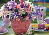 Aquilegia caerulea 'Spring Magic' / Akelei