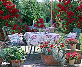 Rosenterrasse mit Kletterrose 'Flammentanz', Erdbeeren,