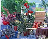 Roter Balkon mit Heuchera Hybr. 'Amethyst Mist', Iresine herbstii, Impatiens