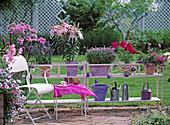 Blumenbänke: Petunia 'Veined Formula Mix', Liatris spicata