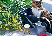 Kasten bepflanzen: Erde, Dauerdünger, Schaufel,