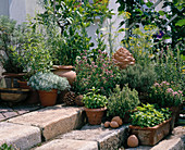 Terrasse mit KRÄUTERN:Basilikum,OREGANUM,THYMUS citrio-