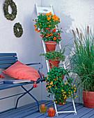 Metallanlehnleiter mit 5 Aufhängern für Blumentöpfe zum