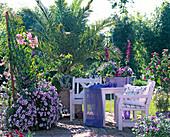 Holzkasten mit Petunia conchita 'Strawberry Forst', Podranea
