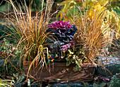 Herbstkasten: Achnatherum brachytricha, Brassica (Zierkohl), Viola cornuta (Horn