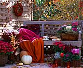 Chrysanthemum 'Dreamstar' und 'Yahou', Brassica (Zierkohl), Erica u. Calluna