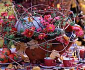 Aster / Herbstastern, Rosa / Ranken und Hagebutten, Clematis / Clematisranken, Heder