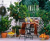 Citrofortunella microcarpa / Calmondinorange, Citrus myrtifolia