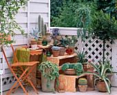 Agaven, Echeverien, Aloe, Cereus / Säulenkaktus, Sedum