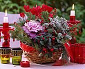 Brassica / Zierkohl, Gaultheria 'Winter Pearls'/ Scheinbeere, Cyclamen persicum