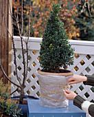 Winterschutz für Kübelpflanzen: 1. Step: Kübel mit Luftposterfolie einpacken, Bu
