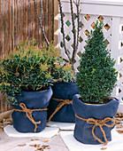 Winterschutz für Kübelpflanzen: 3. Step: Fertig verpackte Kübel auf Styroporplat
