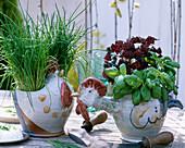 Allium schoenoprasum / Schnittlauch, Ocimum basilicum / Basi-